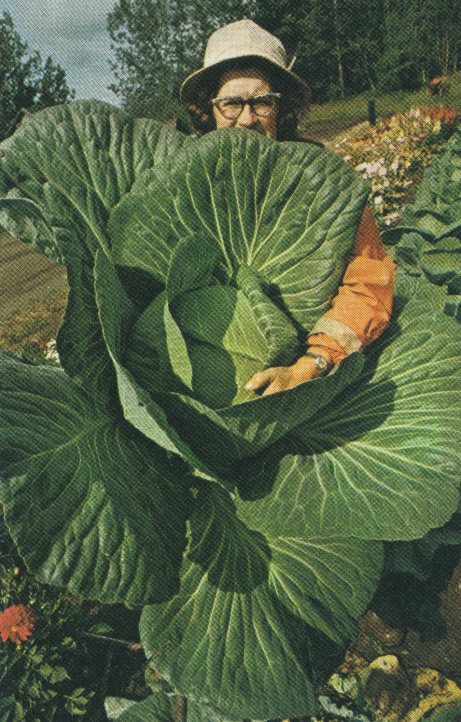 "Matanuska Valley Dwarf Cabbage: TIME Life '""The Foods of the World"""