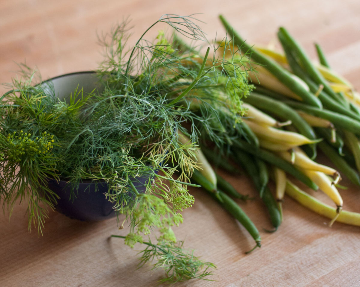 Dill and green beans for pickling